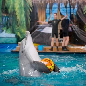 Дельфинарии, океанариумы Истры