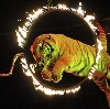 Цирки в Истре