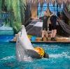 Дельфинарии, океанариумы в Истре