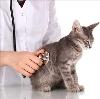 Ветеринарные клиники в Истре